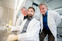 Regenerative Medizin: Proteinsequenz fördert Verzweigung von Nervenzellen