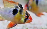 Fische scheuen kein Blitzlichtgewitter
