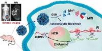 Krebs-Diagnostik - Vervielfältigung und Bildgebung von Mikro-RNA als Biomarker für Tumore