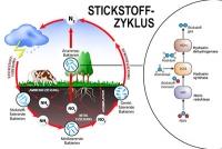 Eine Brennstoffzelle in Bakterien