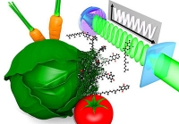 Ein Quantenlineal für Biomoleküle