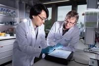 Molekulare Schere stabilisiert das Zell-Zytoskelett