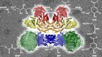 Organisiertes Chaos im Enzymkomplex: überraschende Einsichten und neue Angriffspunkte