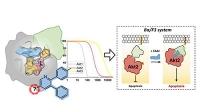 Neue chemische Werkzeuge für die Wirkstoffentwicklung