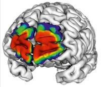 Von der Genexpression zur Mikrostruktur des Gehirns