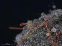 Auswirkungen von Mikroplastik im Boden auf das Ökosystem: Forschung geht in eine neue Phase