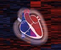 Erstmals menschliches Herzproteom entschlüsselt