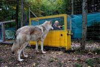 Ursache und Wirkung, der Wolf versteht das besser als der Hund