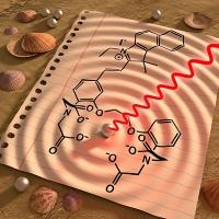 Sichtbare Signale aus Hirn und Herz: Neuer Sensor misst Kalziumkonzentration im Gewebe