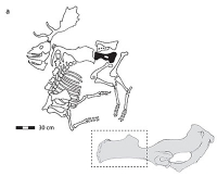 Hieb- und stichfest: So jagten Neandertaler vor 120.000 Jahren