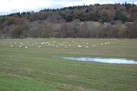E.coli & Co. - Fäkalkeime in Landschaften und Fließgewässern